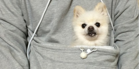 dogcathoodie